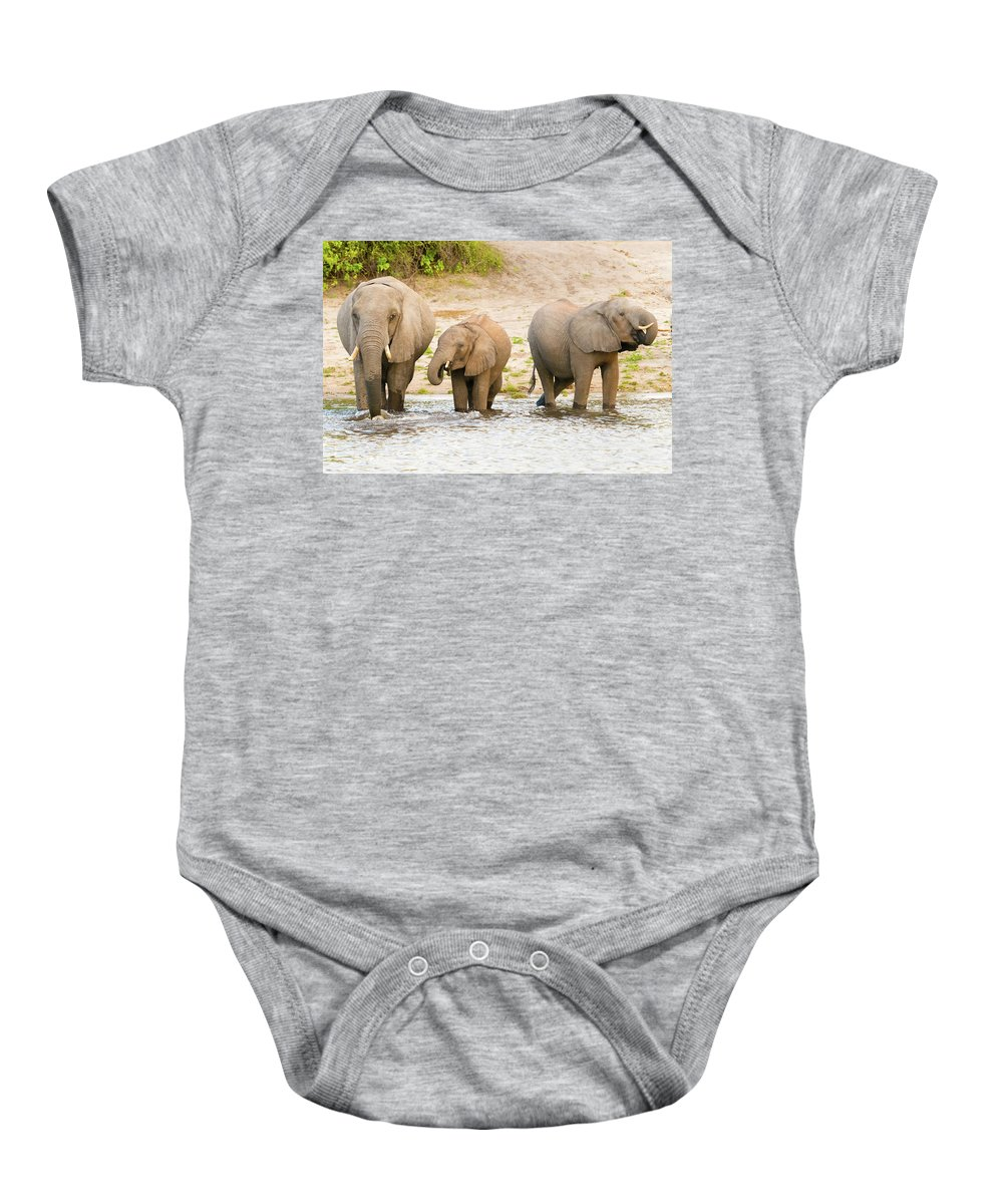 Chobe River Baby Onesie featuring the photograph Elephants At The Bank Of Chobe River In Botswana by Marek Poplawski