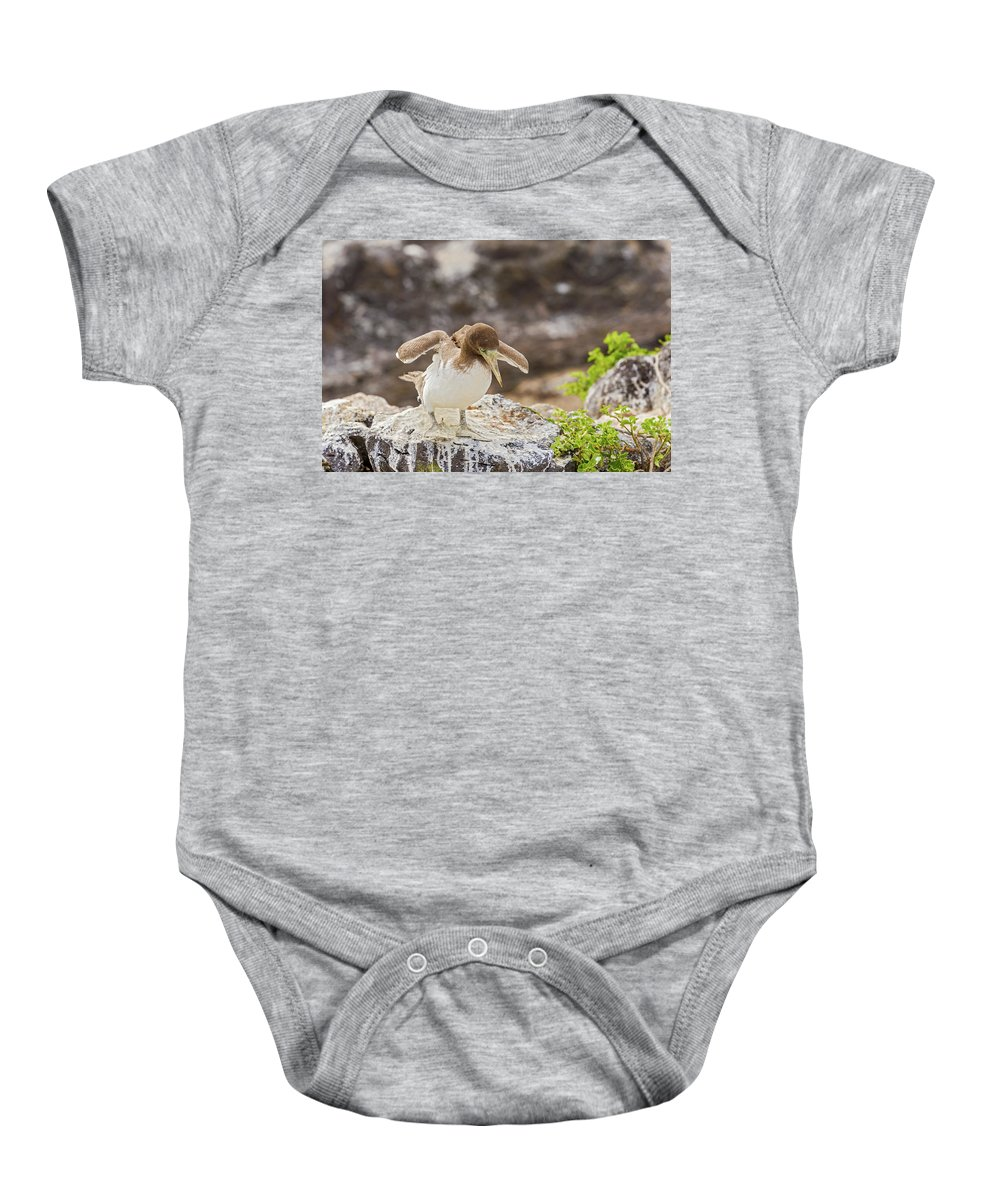 Galapagos Baby Onesie featuring the photograph Juvenile Nazca Booby In Galapagos by Marek Poplawski