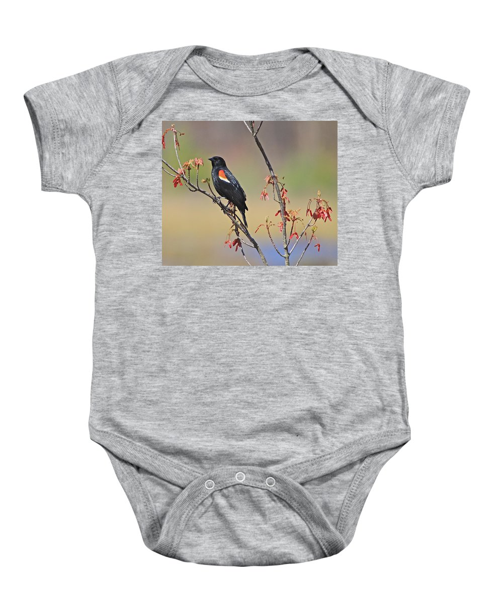 Related Tags: Birds Artwork Baby Onesie featuring the photograph A Red Wing by Robert Pearson