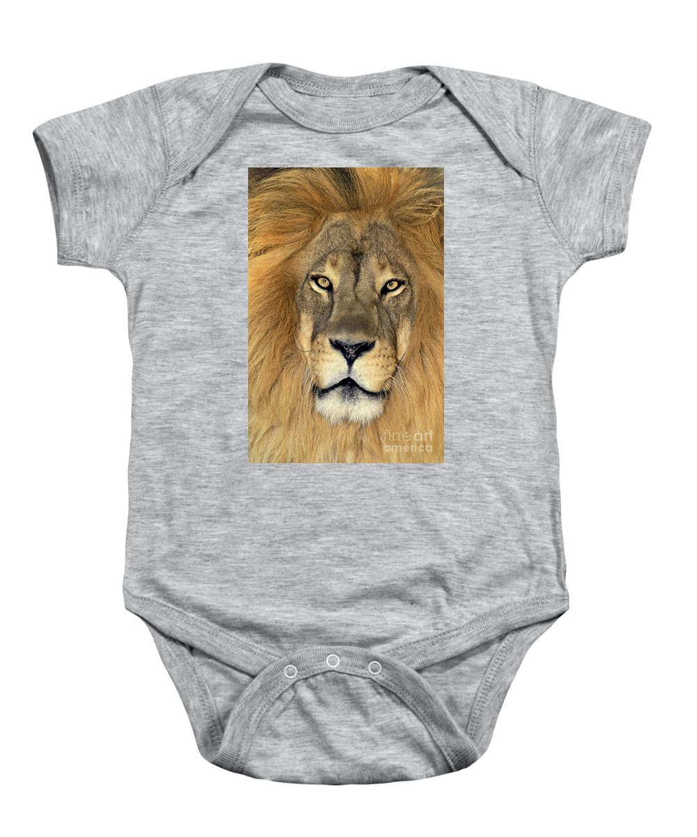 African Lion Baby Onesie featuring the photograph African Lion Portrait Wildlife Rescue by Dave Welling