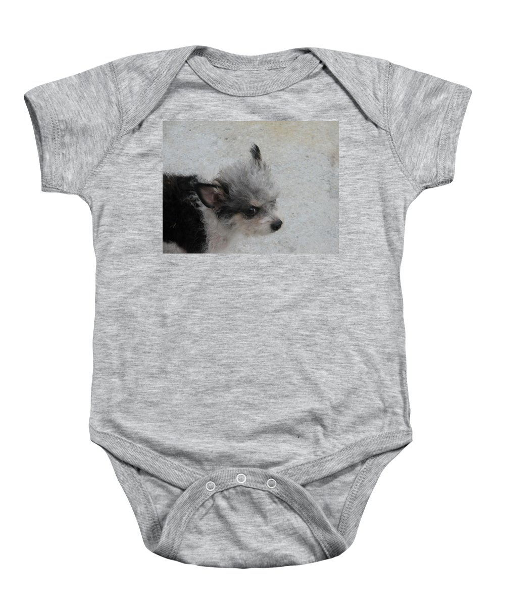 Puppy Baby Onesie featuring the photograph Airport Pup by Kelly Mezzapelle