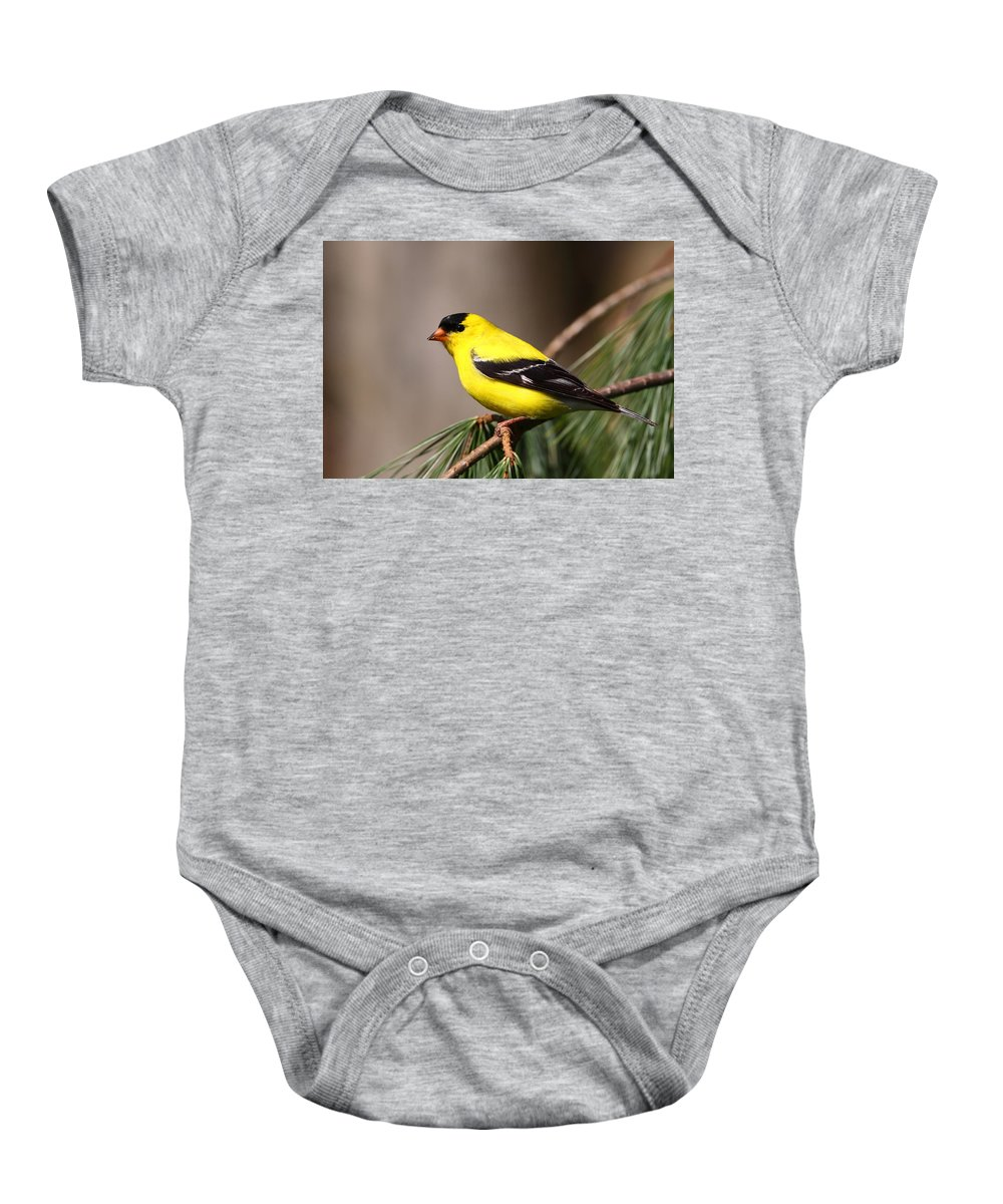 Goldfinch Baby Onesie featuring the photograph American Goldfinch by Bruce J Robinson