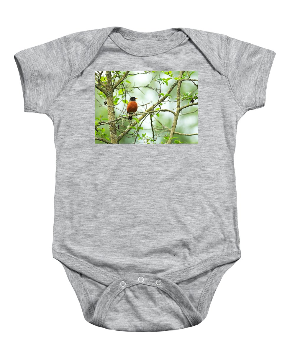American Robin Baby Onesie featuring the photograph American Robin On Tree Branch by Sharon Talson