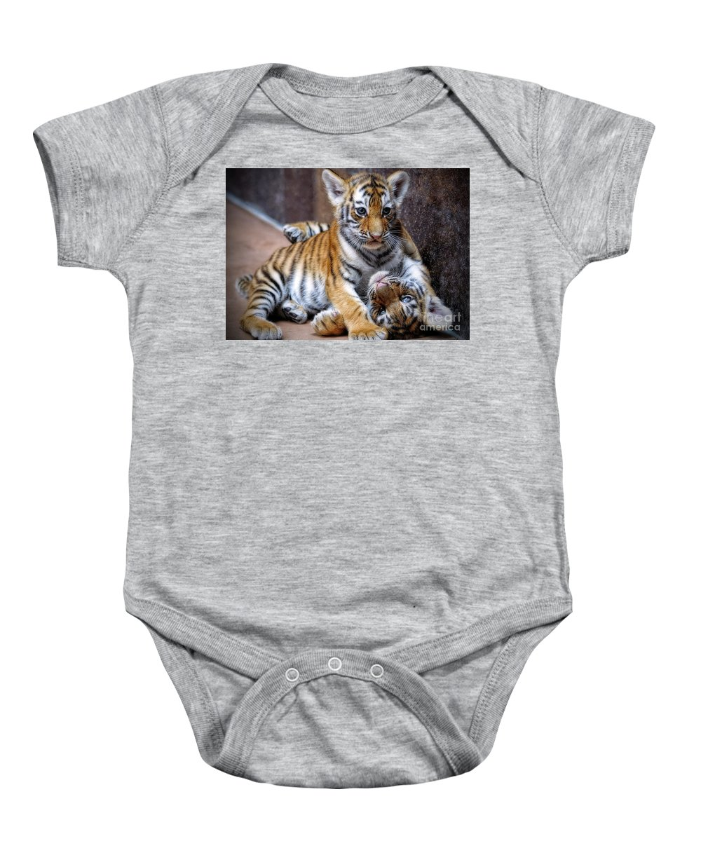 Amur Tiger Cubs Baby Onesie featuring the photograph Amur Tiger Cubs by Elizabeth Winter