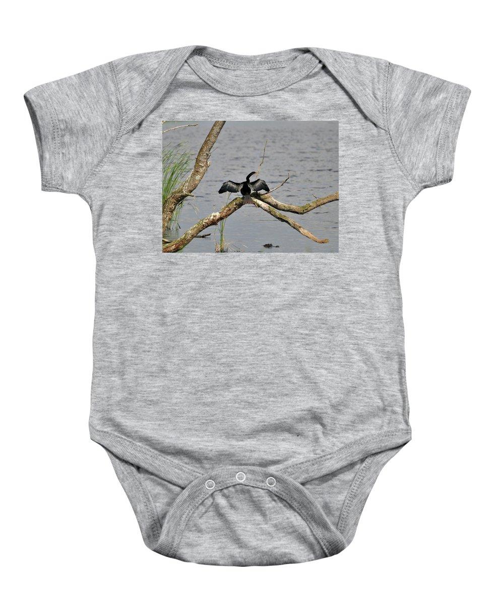 Anhinga Baby Onesie featuring the photograph Anhinga And Alligator by Al Powell Photography USA