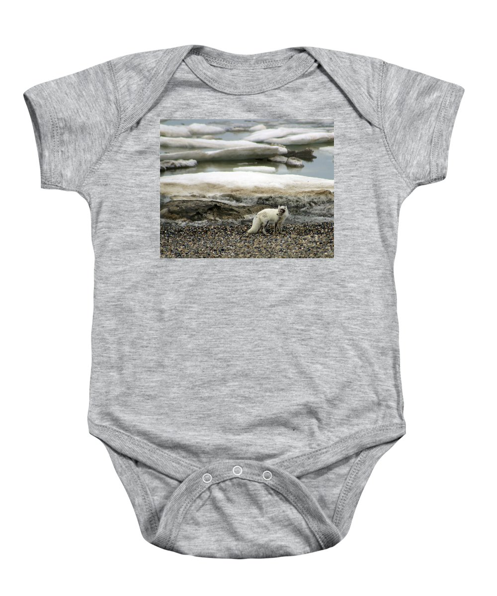 Fox Baby Onesie featuring the photograph Arctic Fox By Frozen Ocean by Anthony Jones