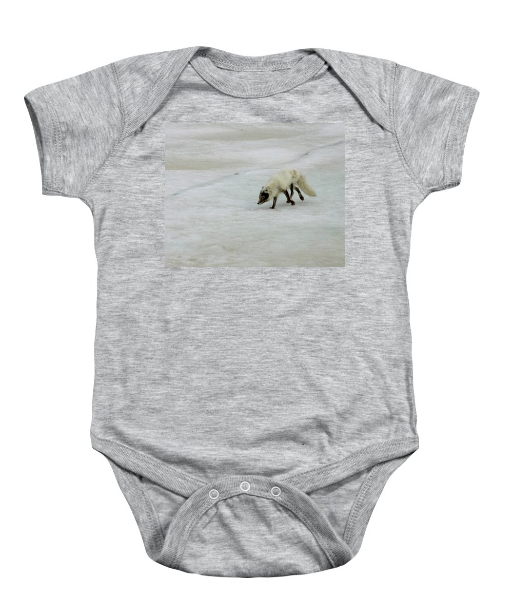 Arctic Fox Baby Onesie featuring the photograph Arctic Fox On Ice by Anthony Jones