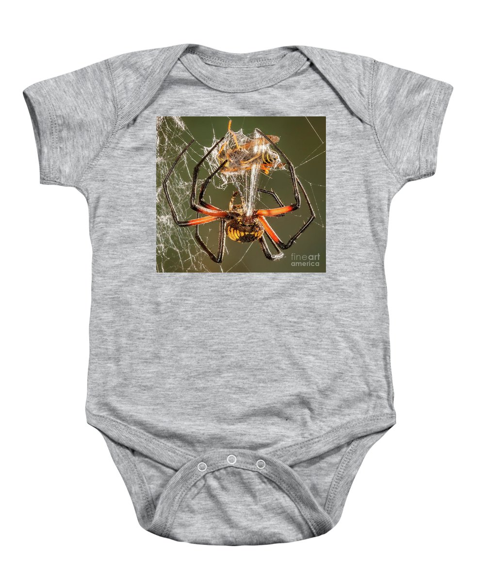 Spider Baby Onesie featuring the photograph Argiope Spider Wrapping A Hornet by Jerry Fornarotto