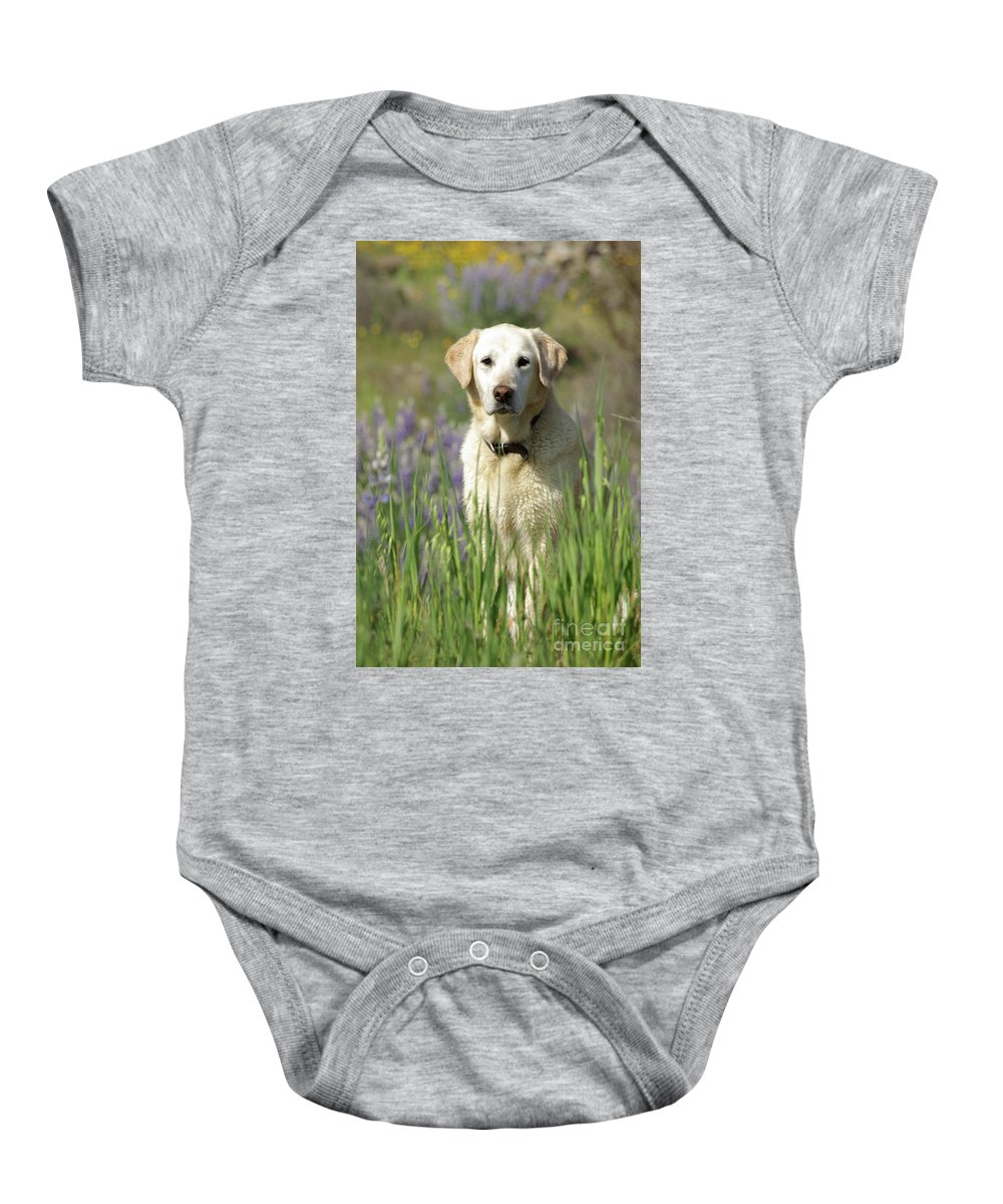 Dog Baby Onesie featuring the photograph At Attention by Jim And Emily Bush