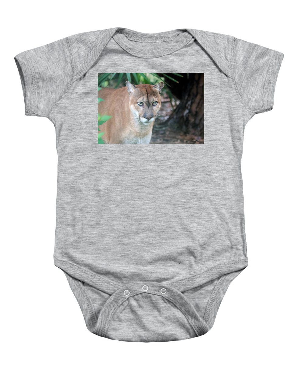 Florida Baby Onesie featuring the photograph Babcock Wilderness Ranch - Oceola The Panther Gazing by Ronald Reid