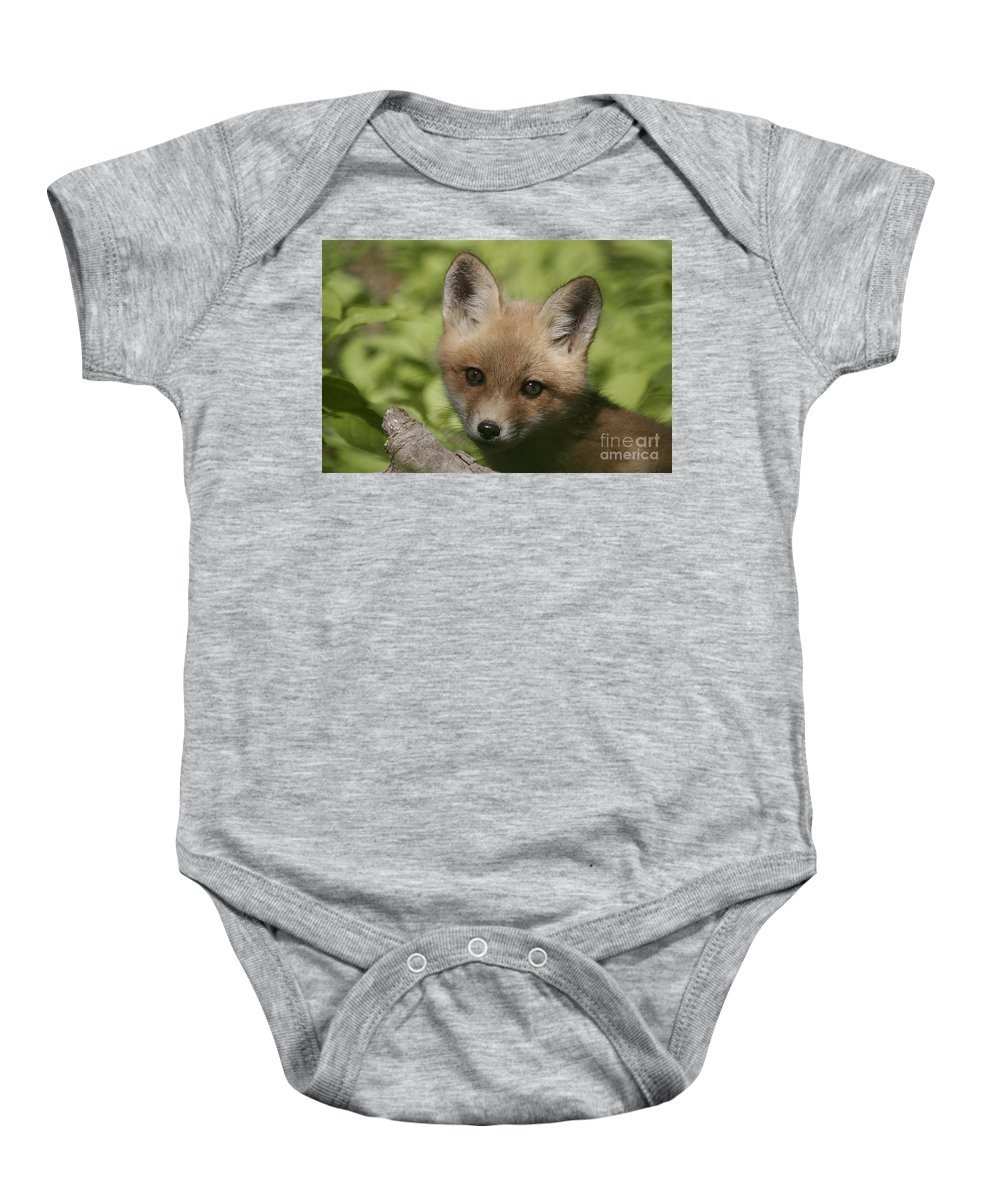 Red Fox Baby Onesie featuring the photograph Baby Red Fox by Robert Pearson