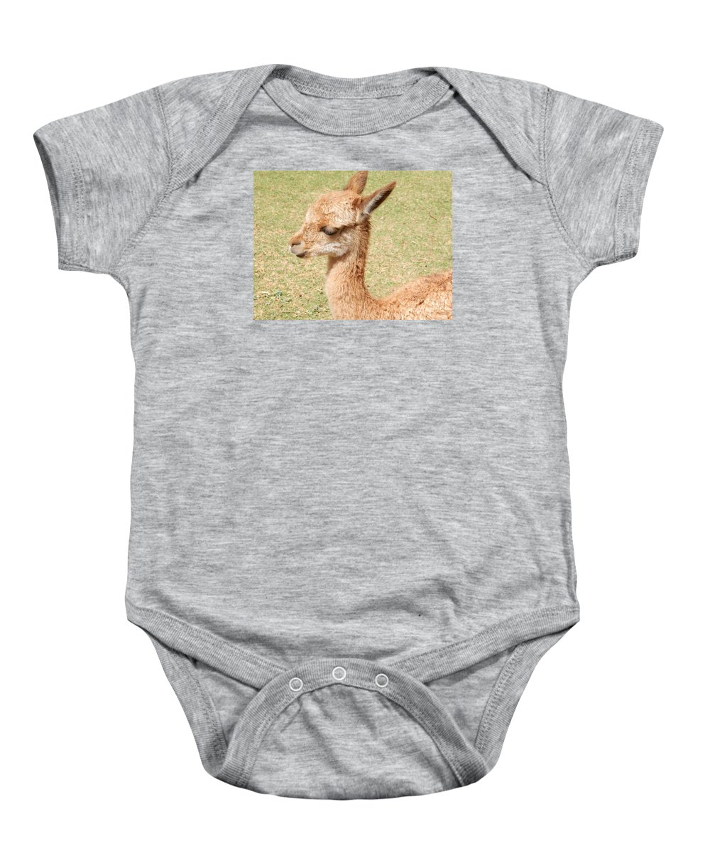 Vicuna Baby Onesie featuring the photograph Baby Vicuna by Megan Thompson