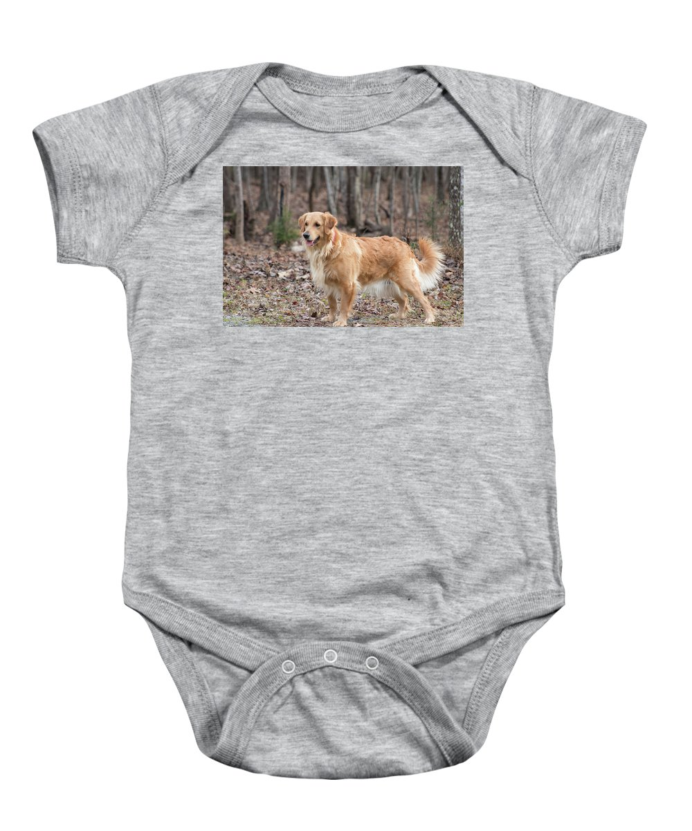 Dog Golden Retriever Pet Baby Onesie featuring the photograph Bailee The Golden by Kristie Cyrus