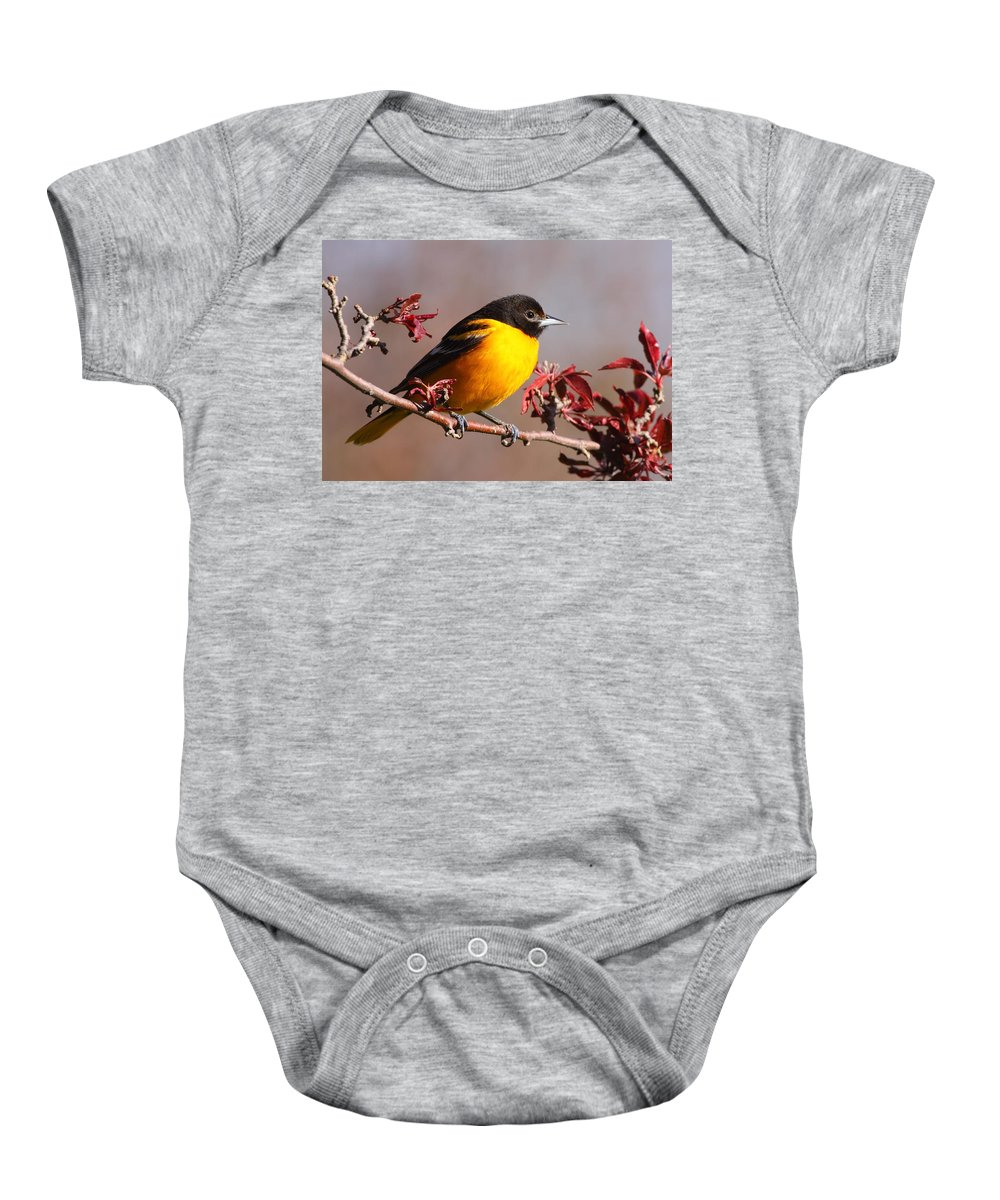 Baltimore Oriole Baby Onesie featuring the photograph Baltimore Oriole In Crabapple by Bruce J Robinson