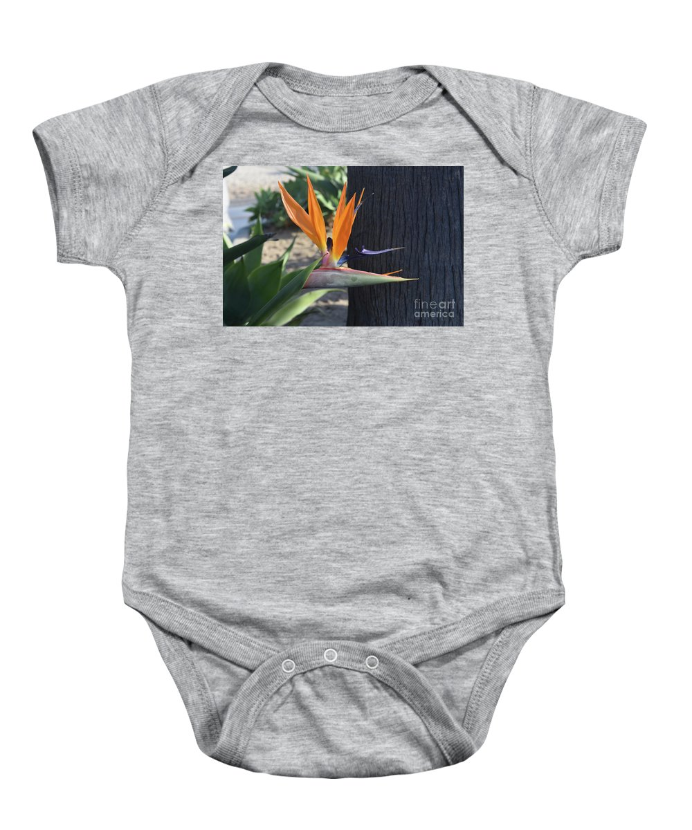 Bird-of-paradise Baby Onesie featuring the photograph Beautiful Bird Of Paradise Flower In Full Bloom by DejaVu Designs