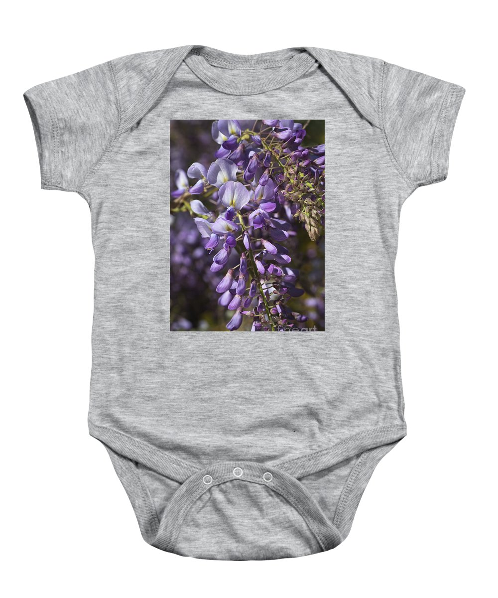 Wisteria Baby Onesie featuring the photograph Beautiful Wisteria A Spring Delight by Joy Watson