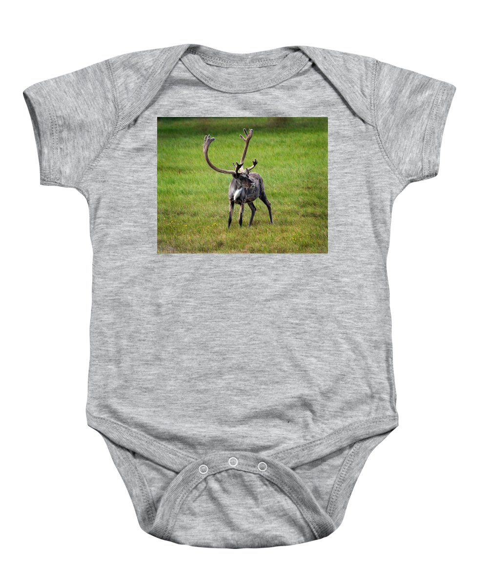 Caribou Baby Onesie featuring the photograph Big Horn by Anthony Jones