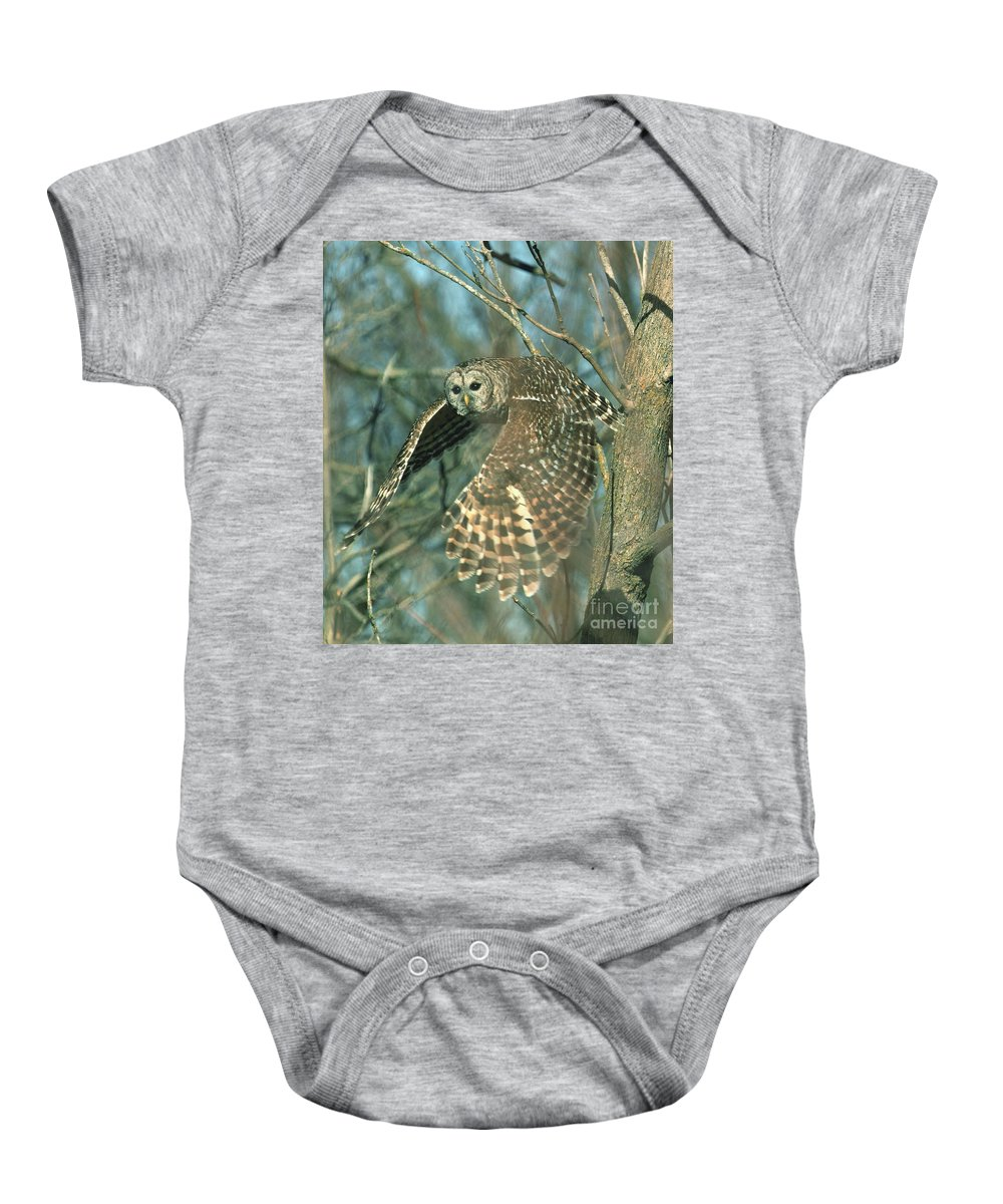 Barred Owl Baby Onesie featuring the photograph Big Spread by Gail Huddle