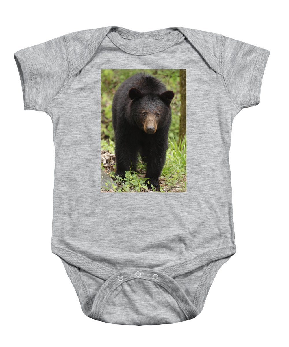 Bear Baby Onesie featuring the photograph Black Bear At Cades Cove by Dick Hudson