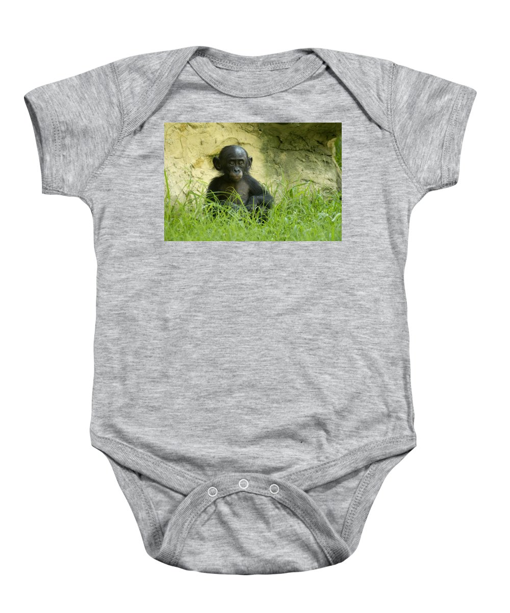 Bonobo Baby Onesie featuring the photograph Bonobo Tyke by D'Arcy Evans
