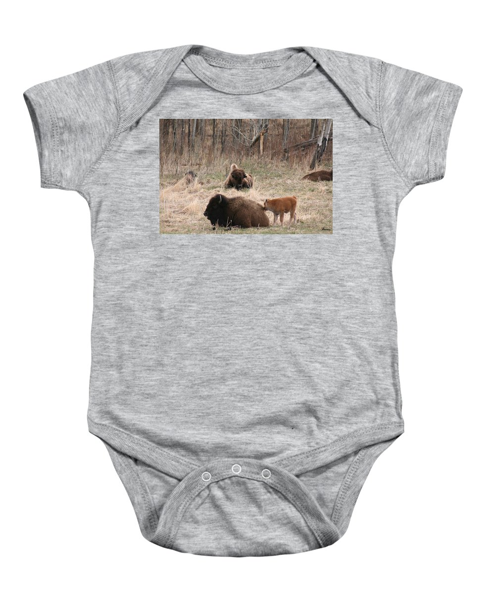Bison Buffalo Calf Baby Animals Nature Love Native Baby Onesie featuring the photograph Buffalo And Calf by Andrea Lawrence