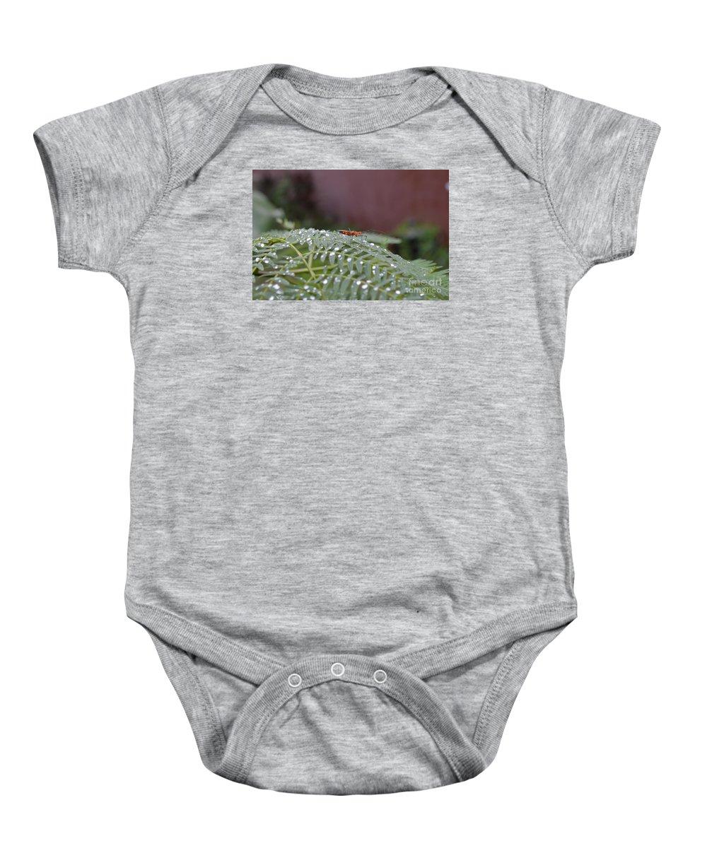 Naturaleza Baby Onesie featuring the photograph Bug Homestead by Lenin Caraballo