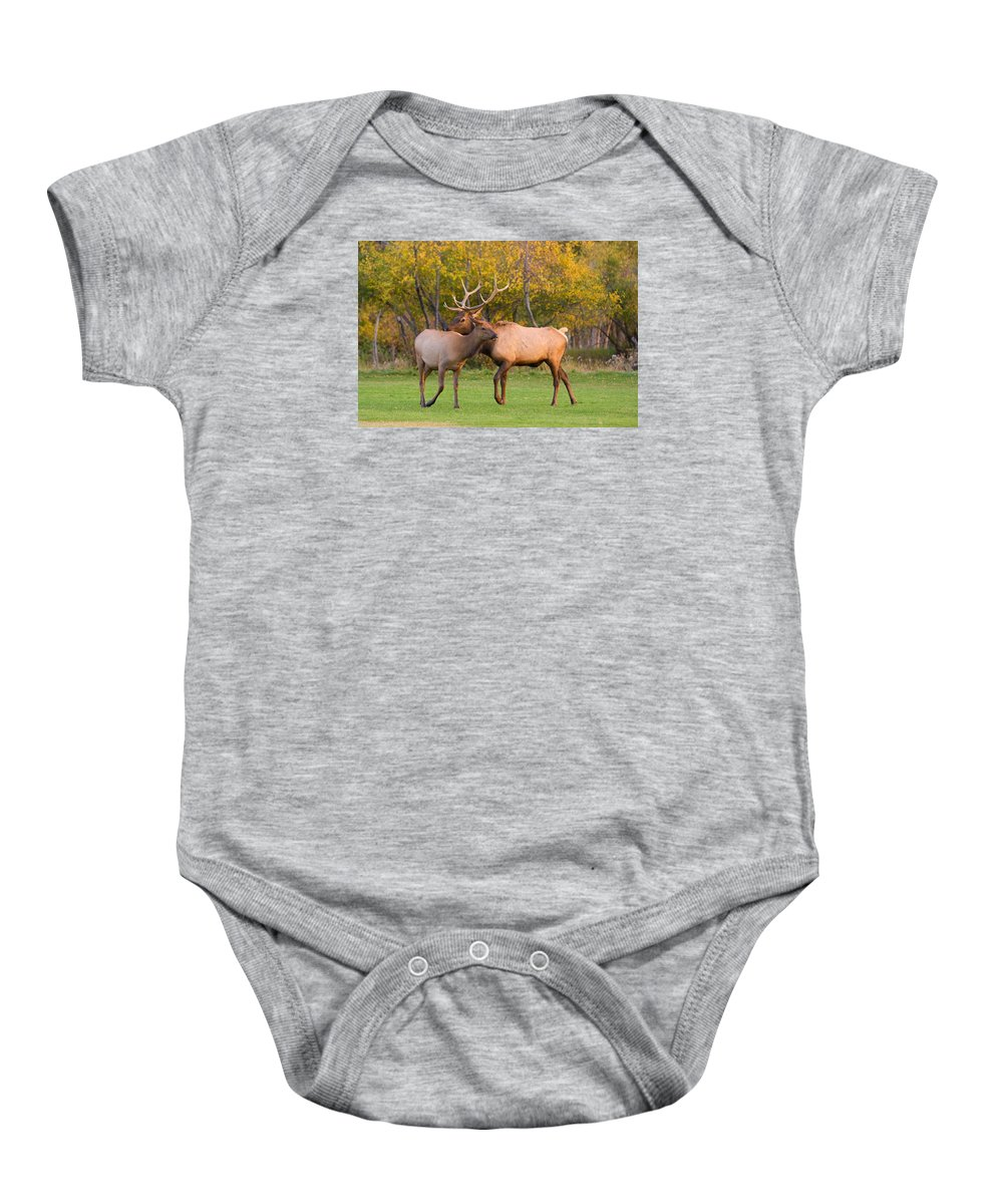 Autumn Baby Onesie featuring the photograph Bull And Cow Elk - Rutting Season by James BO Insogna