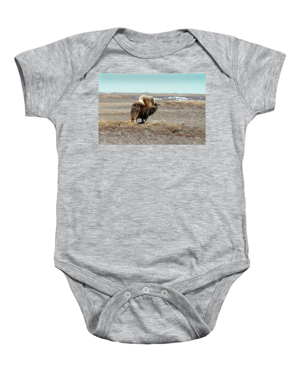 Bull Baby Onesie featuring the photograph Bull Musk Ox by Anthony Jones