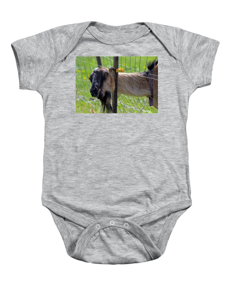 Goat Baby Onesie featuring the photograph Busted by Mike Dawson