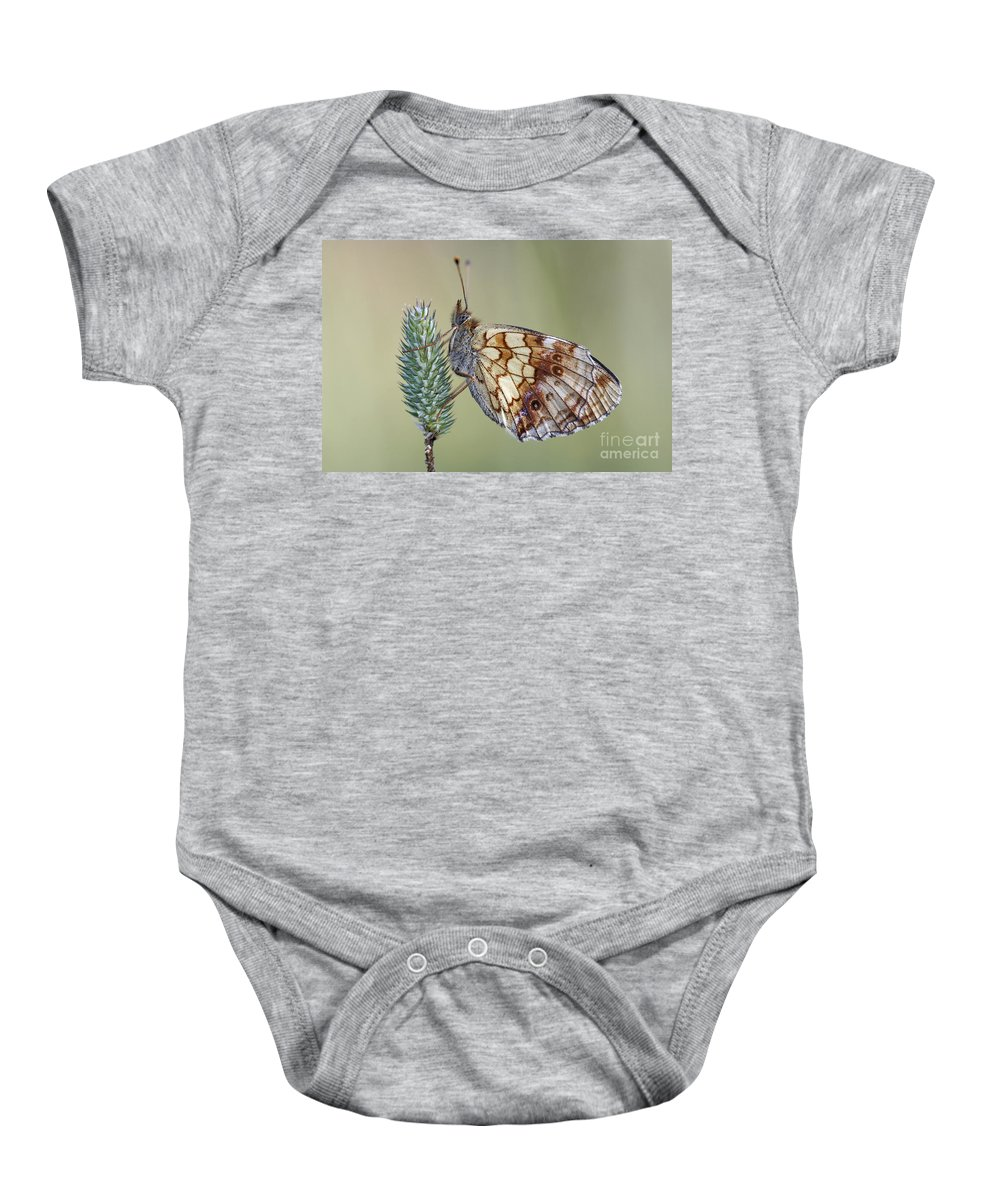 Macro Baby Onesie featuring the photograph Butterfly - Meadow Satyrid by Michal Boubin