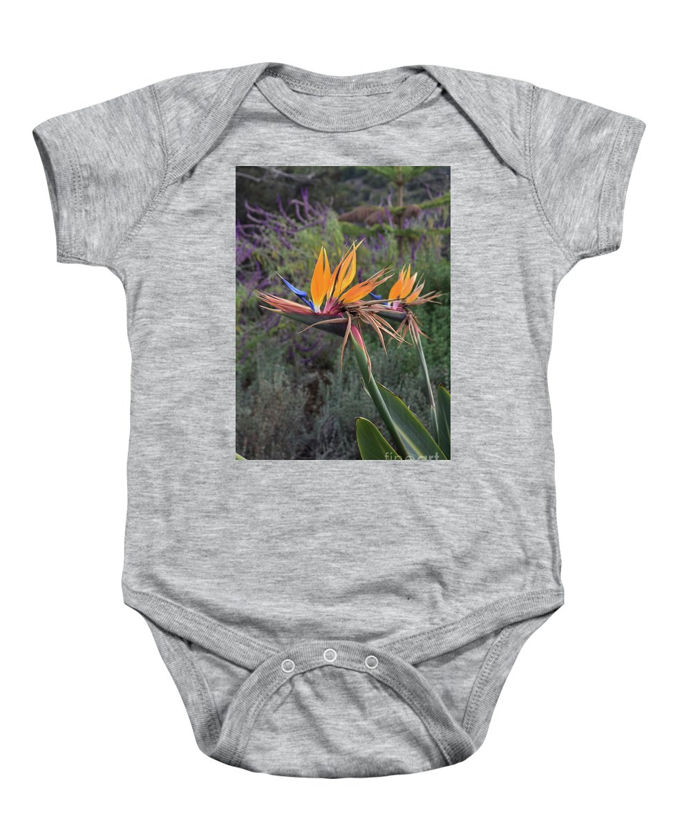 Bird-of-paradise Baby Onesie featuring the photograph Captivating Bird Of Paradise In Full Bloom by DejaVu Designs