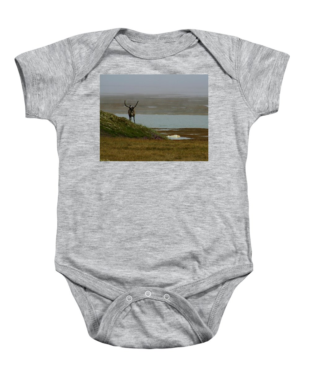 Caribou Baby Onesie featuring the photograph Caribou Fog by Anthony Jones