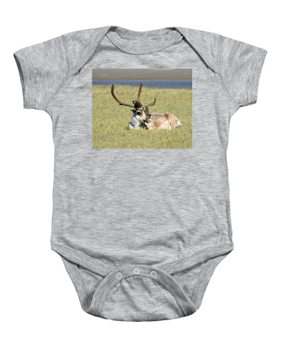 Caribou Baby Onesie featuring the photograph Caribou Rest by Anthony Jones