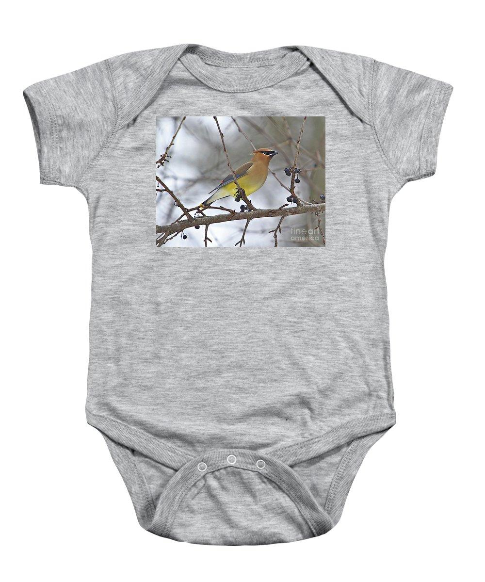 Cedar Wax Wing Baby Onesie featuring the photograph Cedar Wax Wing-2 by Robert Pearson