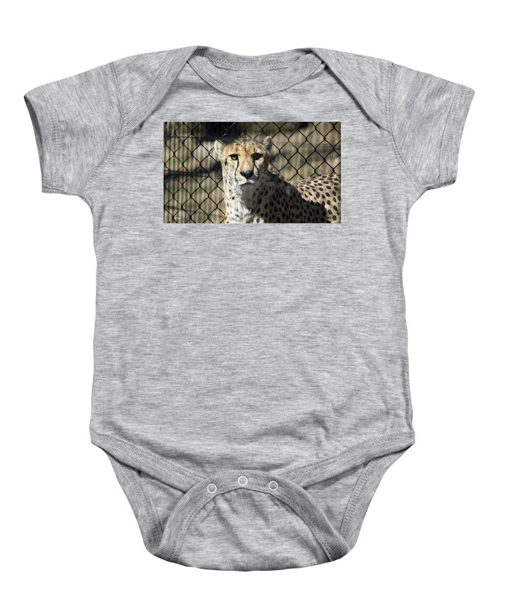 Maryland Baby Onesie featuring the photograph Cheetah Alert by Ronald Reid