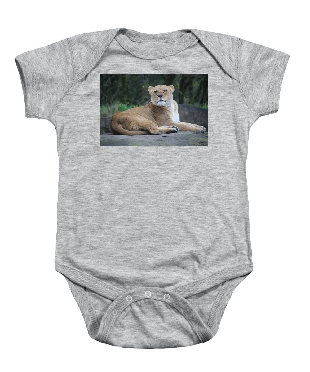 Baby Onesie featuring the photograph Contented Lioness by Crooked Cat Art and Photography