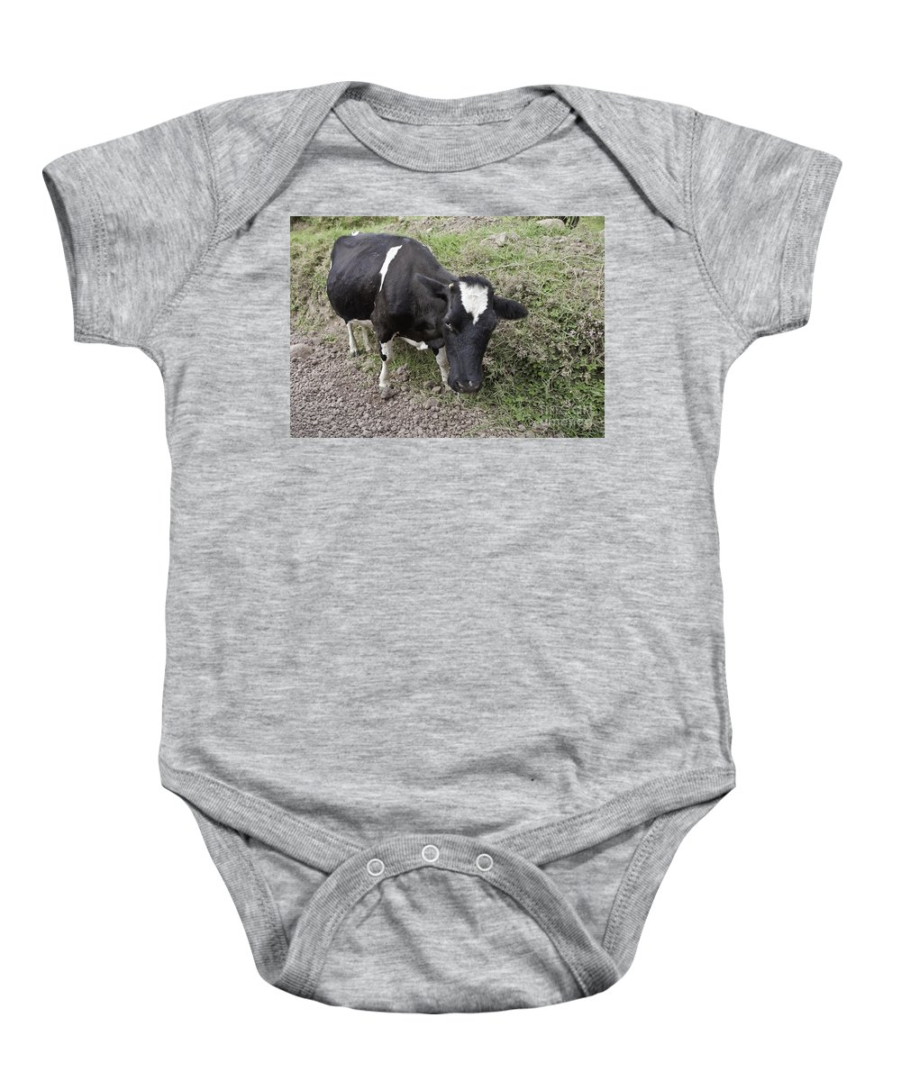 Cow Baby Onesie featuring the photograph Cow Tow by Madeline Ellis