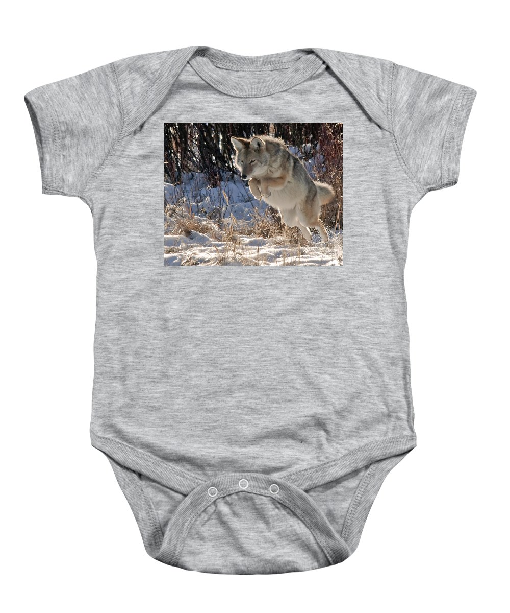 Coyote Baby Onesie featuring the photograph Coyote In Mid Jump by Gary Beeler
