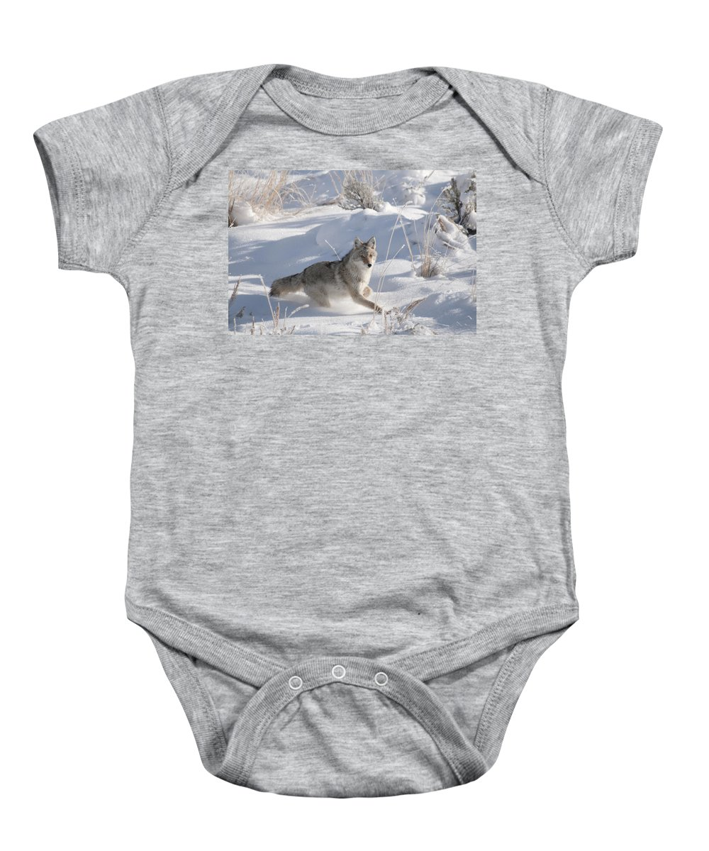 Coyote Baby Onesie featuring the photograph Coyote On The Move by Gary Beeler