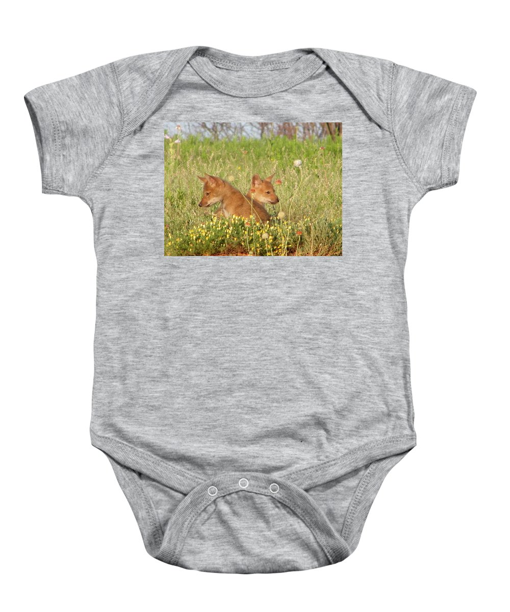 Pup Baby Onesie featuring the photograph Coyote Pups by Gale Cochran-Smith