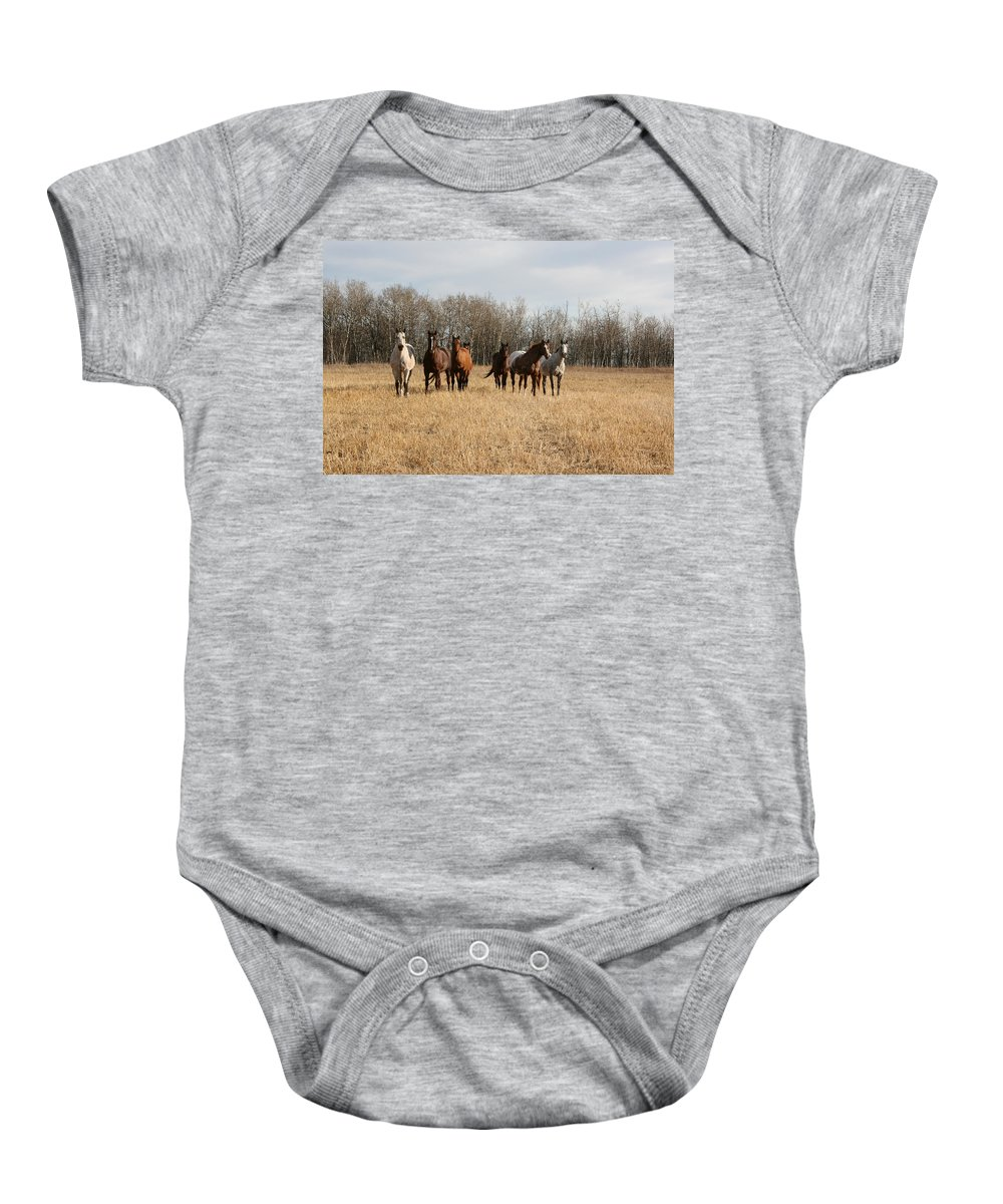 Horses Herd Animals Ranch Cowboy Appaloosa Quarter Horse Mares Pasture Field Grass Baby Onesie featuring the photograph Curious Horses by Andrea Lawrence