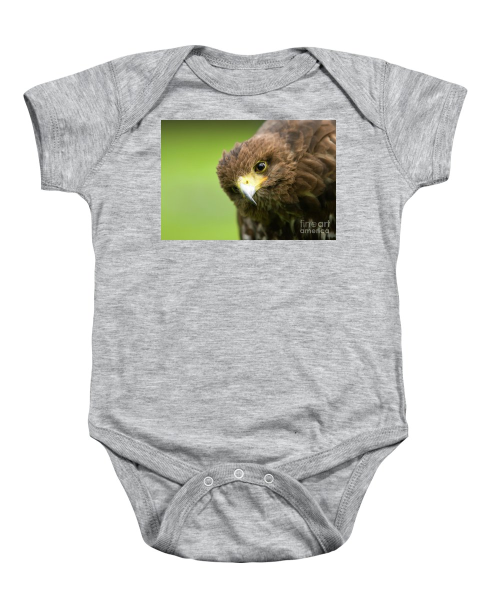 Bird Of Prey Baby Onesie featuring the photograph Curious One by Angel Ciesniarska