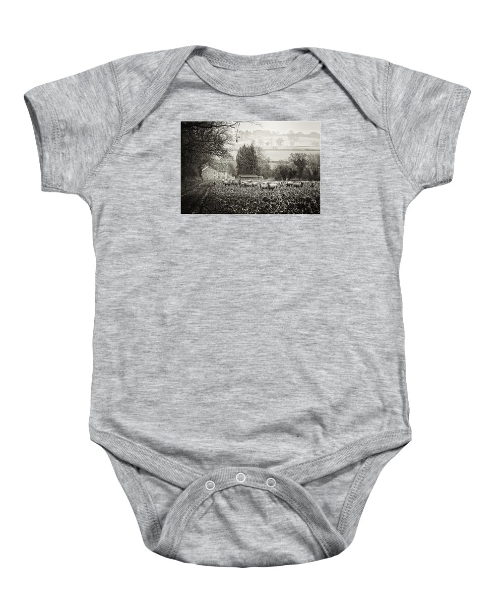 Sheep In Sprouts Baby Onesie featuring the photograph Dreaming Pastoral by Wendy Chapman