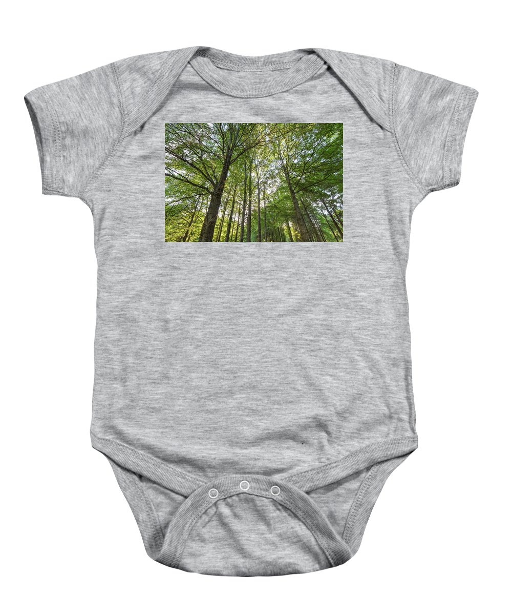 Beauty In Nature Baby Onesie featuring the photograph Early Morning In The Forest by Bryan Pollard