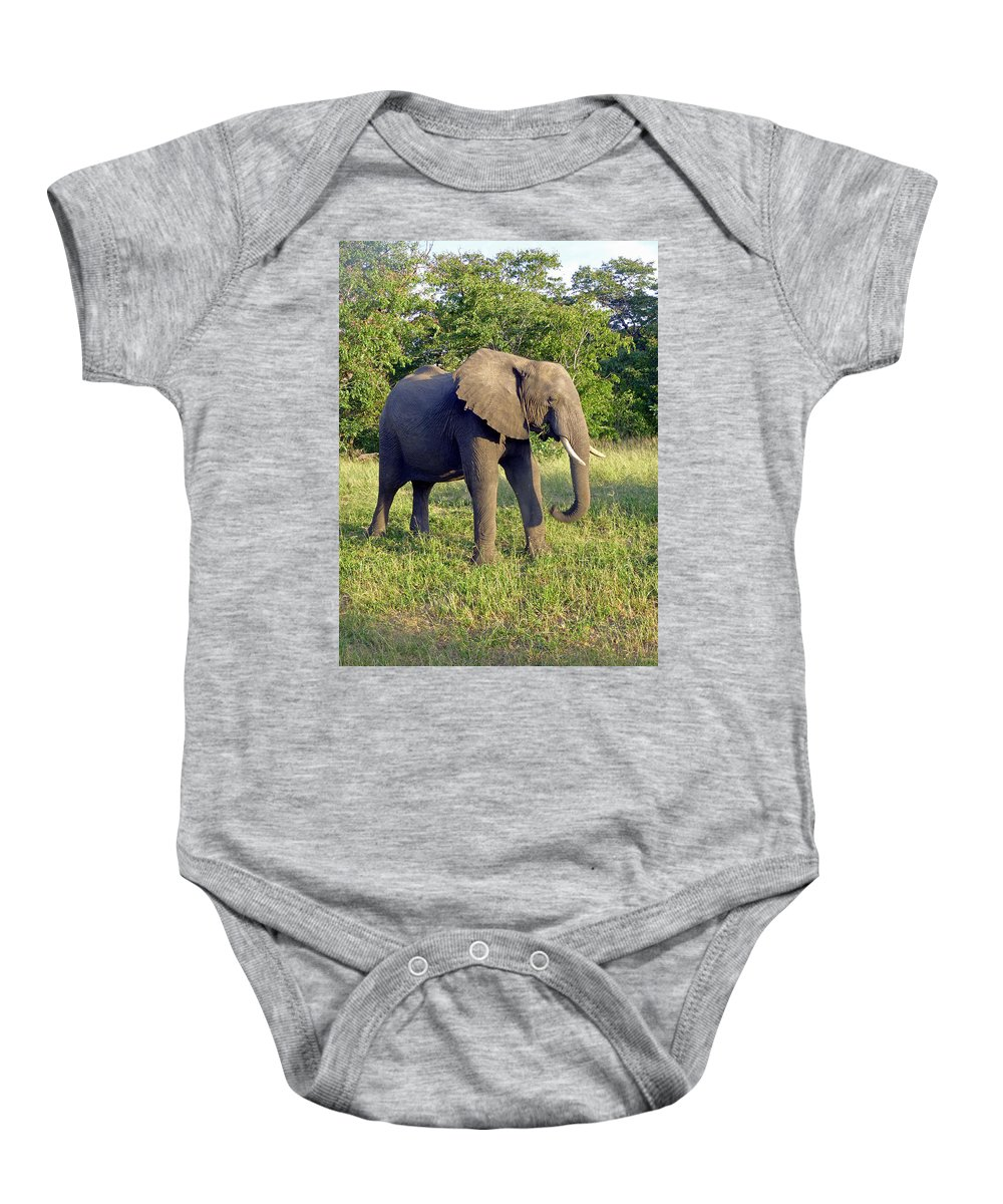 Wildlife Baby Onesie featuring the photograph Elephant by Tony Murtagh