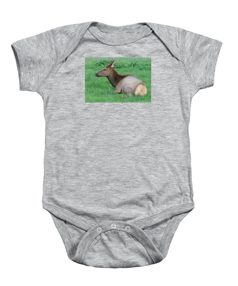 Elk Baby Onesie featuring the photograph Elk Cow by Mary Halpin