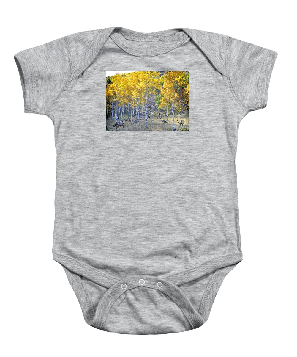 Nature Baby Onesie featuring the photograph Elk In Rmnp Colorado by Nava Thompson