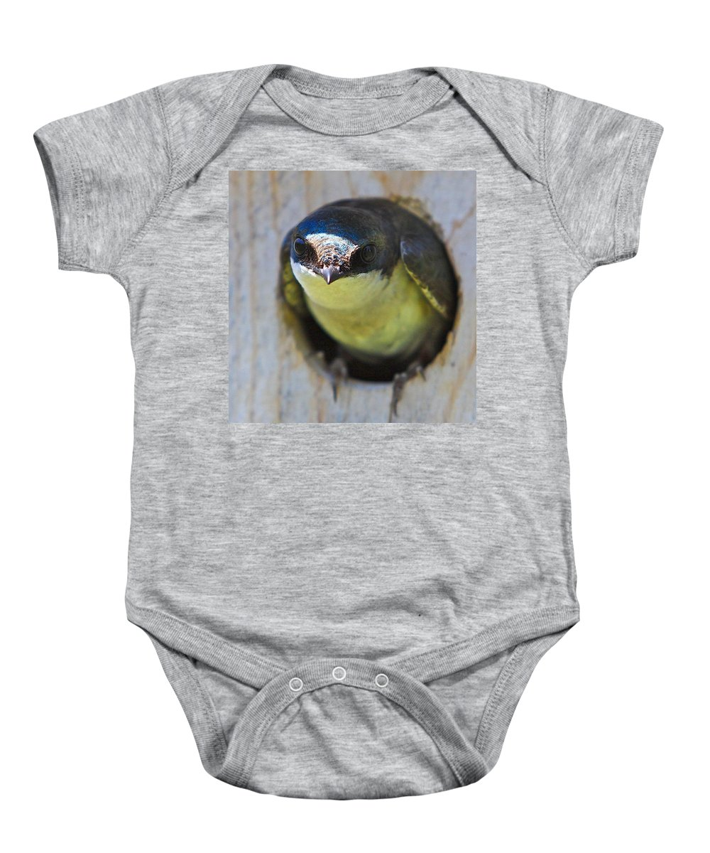 Related Tags: Birds Artwork Baby Onesie featuring the photograph Eye To Eye by Robert Pearson