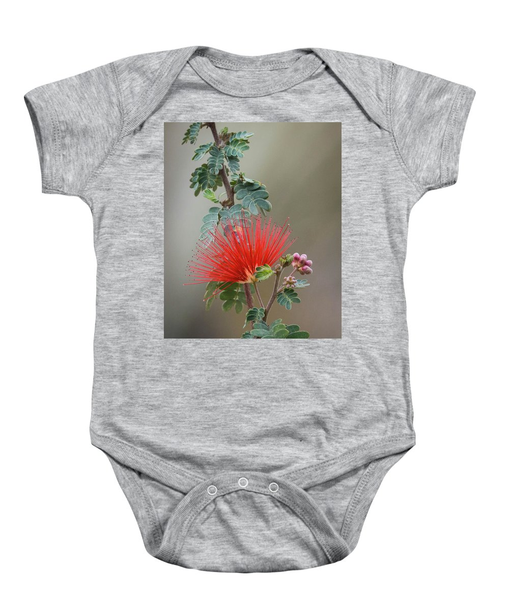 Fairy Baby Onesie featuring the photograph Fairy Duster-img_488917 by Rosemary Woods-Desert Rose Images