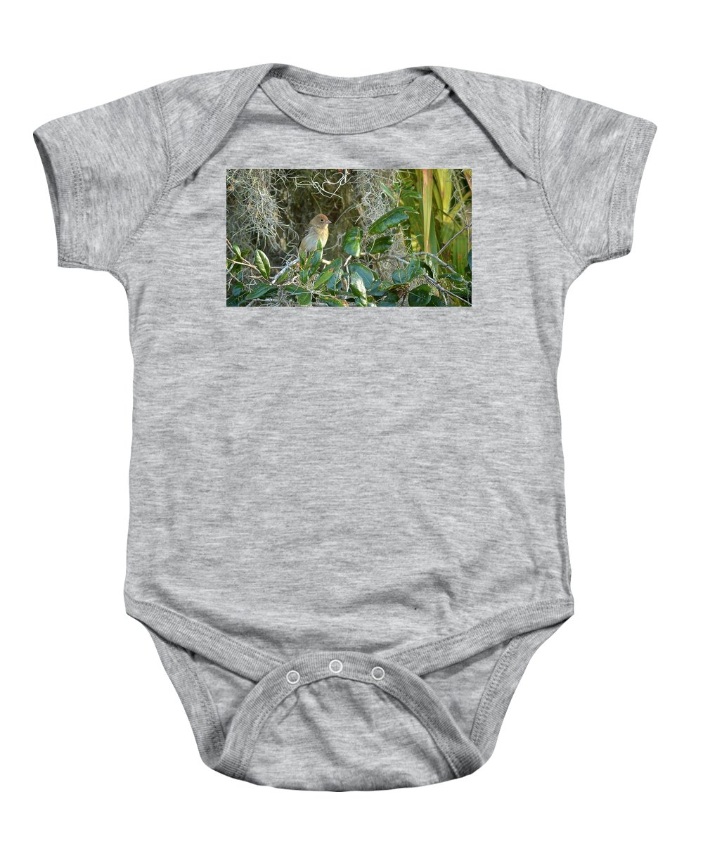 Immature Baby Onesie featuring the photograph Immature Female Indigo Bunting by Carol Bradley
